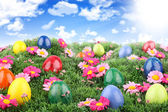 Easter meadow — Stock Photo