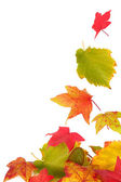 Autum leaves — Stock Photo