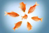 рыба моббинга — Стоковое фото