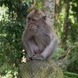 Foto Stock: Monkey in forest