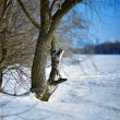 Trunk of the willow at the shore of frozen river - Stock Photo