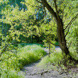 Green willow, young grass, and sunlit glade in spring forest — Stock Photo