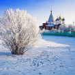 Stock Photo: Hoary bush on background of Churches in Kolomna, Russia