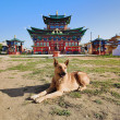 A dog near the Temple of Pure Land in Ivolginsky Datsan - Stock Photo
