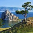 Stock Photo: Tree of desires on Lake Baikal