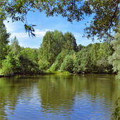 Landscape with trees at the shore of forest lake — Stock Photo