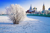 Hoary bush on the background of Churches in Kolomna, Russia — Stock Photo
