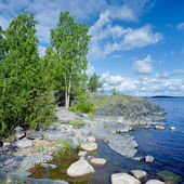 Birch on the stony shore of Ladoga lake — Stock Photo