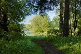 Chodnik między drzewami, co prowadzi do jeziora — Zdjęcie stockowe