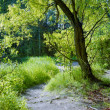 Stock Photo: Green willow, young grass, and sunlit glade in summer forest