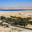Stock Photo: Parking under the palm trees near Dead Sea