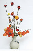 Bouquet with dry physalis — Stock Photo