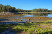 Coast of White Sea during the low tide, Solovetsky Islands — Stock Photo