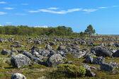 Field with stones on the Bolshaya Muksalma Island, Russia — Stock Photo