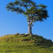 Tree of desires on cape Burhan of Olkhon Island on Lake Baikal — Stock Photo