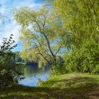 Willow on the river in early autumn — Stock Photo