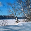 Willow on the frozen river on sunny winter day — Stock Photo