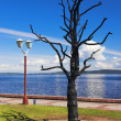 Tree of Desire in Petrozavodsk — Stock Photo