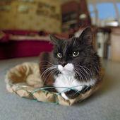 Cat in the interior, close-up — Stock Photo