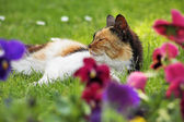 Three-colored cat on the grass with flowers — Stock Photo