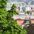 The branches of the chestnut over Kiev, Ukraine — Stock Photo #36152439