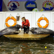 Stock Photo: Seals show in Murmansk oceanarium