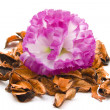 Stock Photo: Orange Potpourri