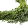 Fresh Green Dill of the garden  — Stock Photo