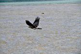 Létající pták na oceánu — Stock fotografie