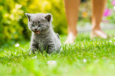 Kitten — Stock Photo