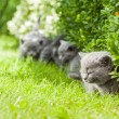 Young grey kitten lying in the garden on fresh green grass — Stock Photo