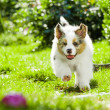Puppy in park - Stock Photo