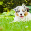Puppy in park — Stockfoto