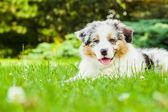 Cachorro en el parque — Foto de Stock