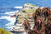 Liggande vy på cliff med omskakande vågor vid cape point — Stockfoto