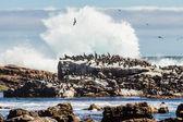 птицы, сидя на скале — Стоковое фото