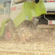 Corn harvest — Stock Video #23660613
