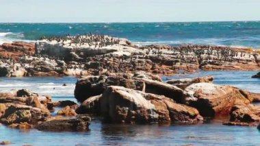 Birds sitting on the rock — Stock Video