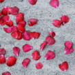 Stock Photo: Falling rose petals