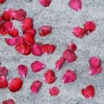 vallende rozenblaadjes — Stockfoto