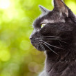 Black cat on nice green bokeh background — Stock Photo #15617509