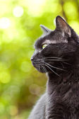 Black cat on a nice green bokeh background — Foto Stock