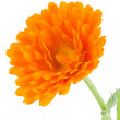 Pot marigold (Calendulofficinalis) isolated on white background — Stock Photo #15732261