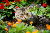 Green-eyed cat sitting among flowers — Stock Photo