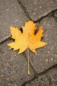 Autumnal leaf — Stock Photo
