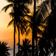 Coconut at sunset — Stock Photo