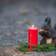 Squirrel is eating a nut near a candle light — Stock Photo