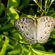 Butterfly in Vietnam - Stock Photo