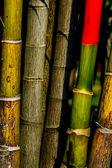 Dettaglio bambù — Foto Stock