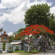 Near Go Cong - Pagode and ''Flamboyant tree'' - Tien Giang Province — Stock Photo